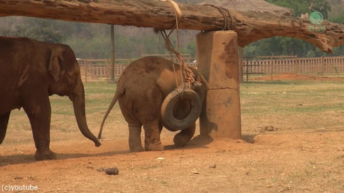 子ゾウ「もっと遊びたい!」母ゾウ「ご飯の時間よ!」02