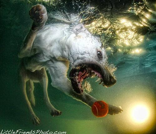 水中の犬07