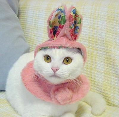 猫コスプレ03
