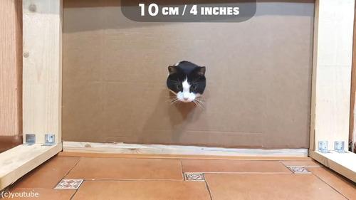 猫が通れる穴のサイズを実験07