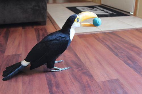 オオハシという珍妙な鳥05