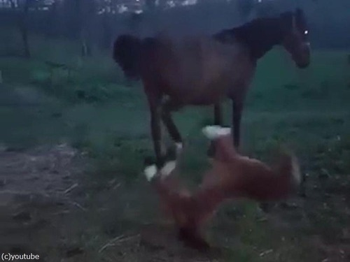 馬とぬいぐるみの馬05