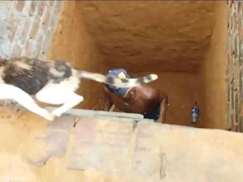 穴の下から猫を救出するつもりが08