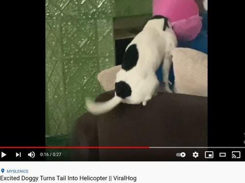 プロペラみたいな犬のしっぽ