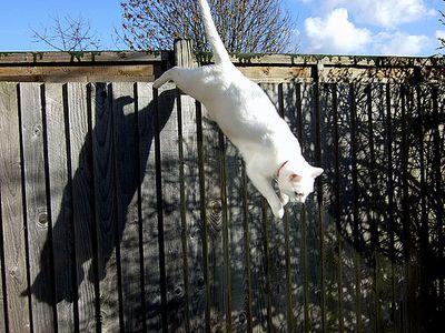 猫ジャンプ10