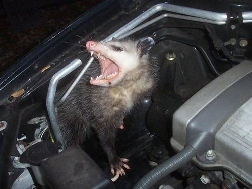 車の中にいる動物05