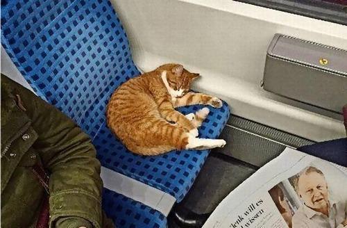 ドイツの電車に猫が乗ってる02
