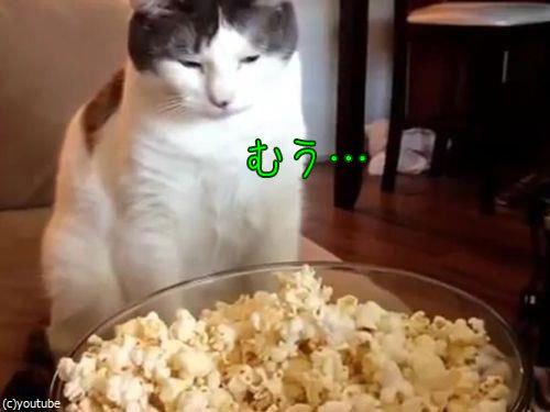 作りたてのポップコーンと猫00