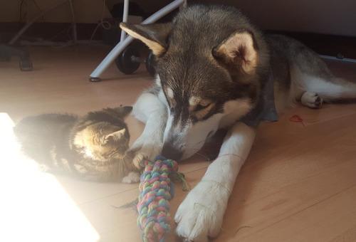 不安症の犬が子猫と出会った01