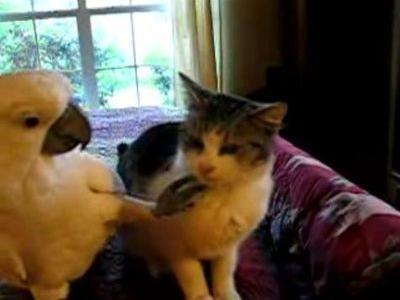 猫とオウム