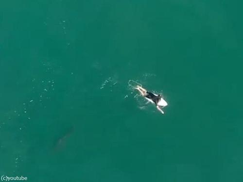 ドローンの警告でサメを回避したサーファー05