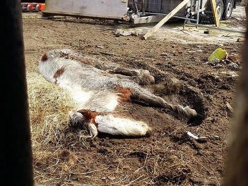 死にかけていた馬が神々しいほど美しくなる00