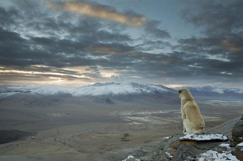 ヒマラヤ登山に犬が着いてきた01