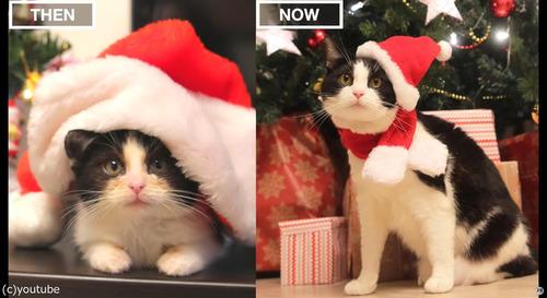 猫の3か月と3歳を比較05