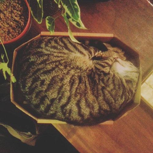 イギリスの猫パブ09