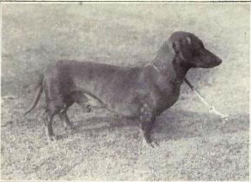 犬種は100年でこう変わった03