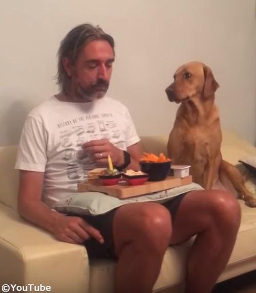 犬「べ、べつに興味ないし!」01