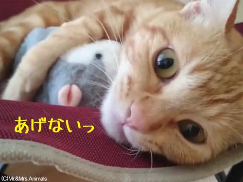 声真似おもちゃを猫に与えた結果00