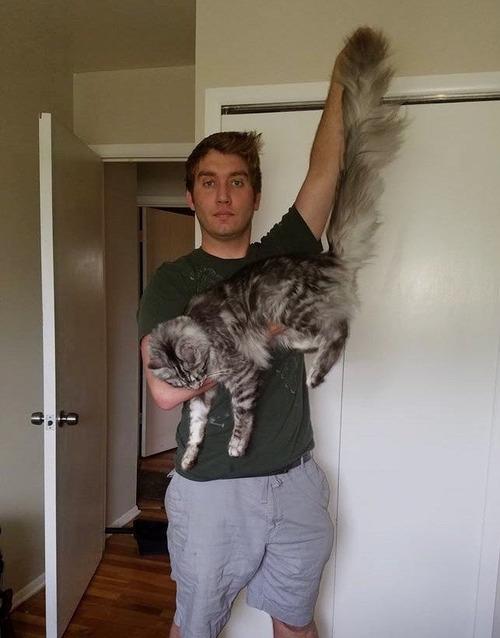猫のしっぽが世界記録に06