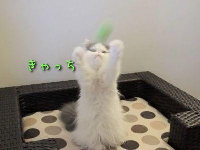 キャッチボール猫