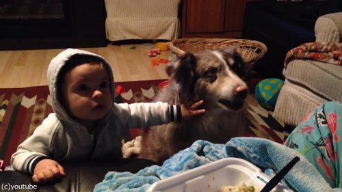 隣の犬「ママー」赤ちゃん「えっ」05