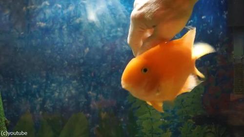 なつっこい魚01