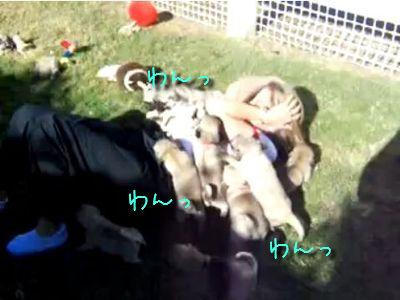 子犬の群れに襲われる女性
