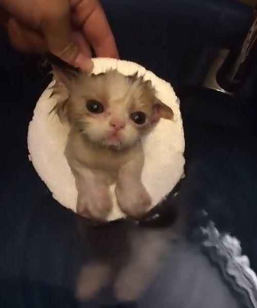 浮き輪でお風呂に浸かる子猫01
