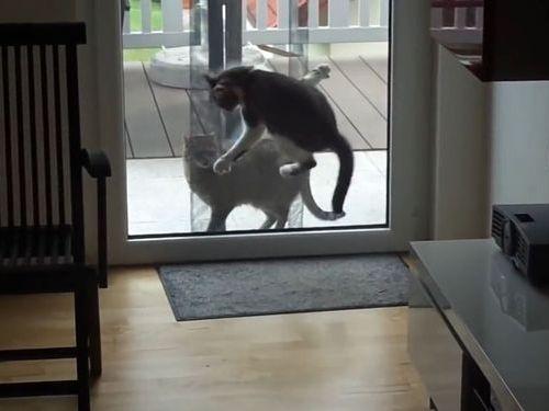 すごいポーズを見せつける猫01