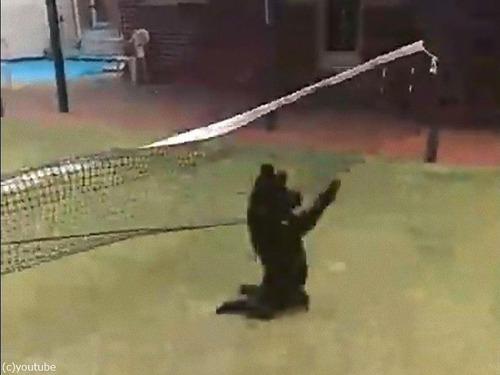 テニスのネットに引っかかった犬の宙返り05