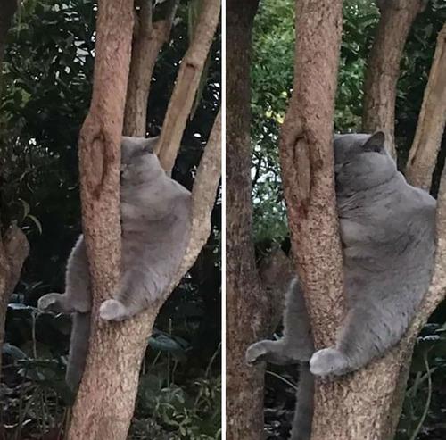 鳥のように木に止まる猫たち02