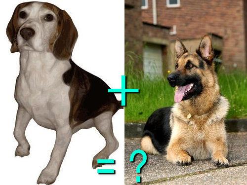 犬の混血A 10