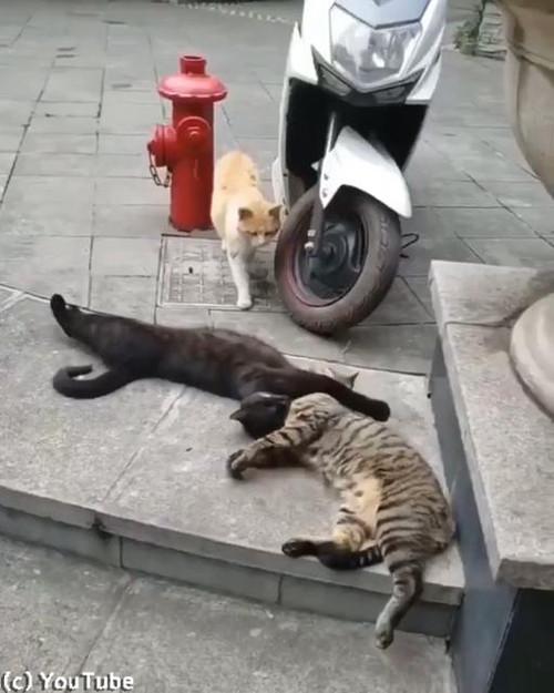 猫の修羅場シーン01