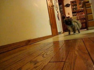 自動犬の運動システム