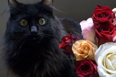 バラの似合うペット14