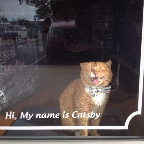 本屋の猫08