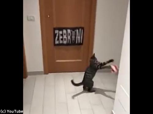 ゴールキーパー猫00