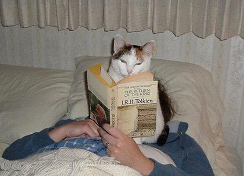 猫に生活を脅かされる32