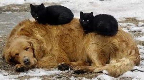 眠る猫18
