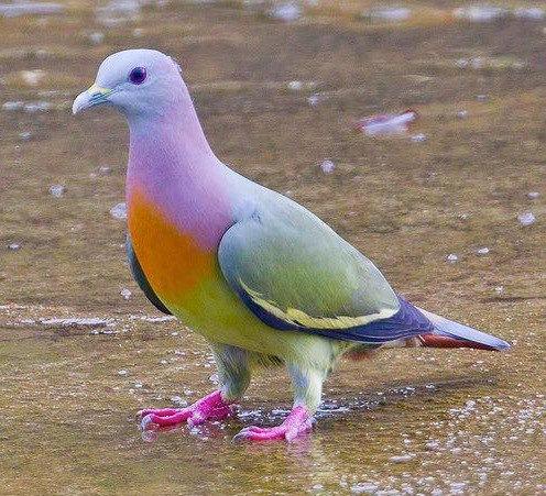 ロンドンで虹色のハトを見た06