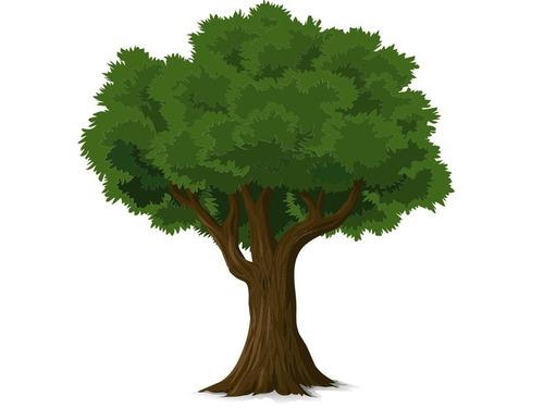 木の穴に頭を突っ込んではいけない理由00