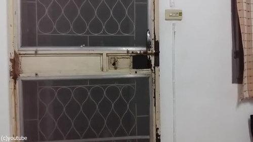 ドアから脱出する猫06