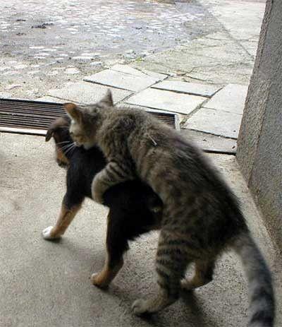 犬に覆いかぶさる猫