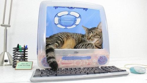 iMacと猫04