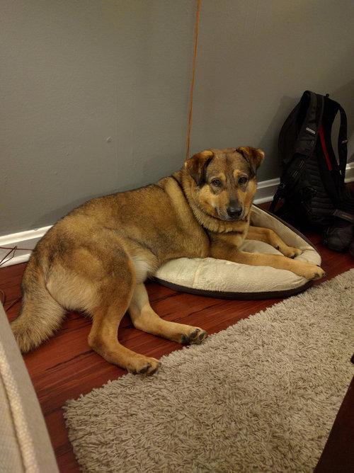子犬用のベッド01