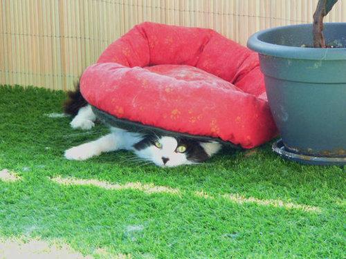 おかしな猫たち15