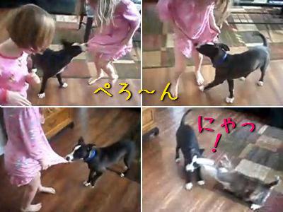 スケベな犬と撃退する猫
