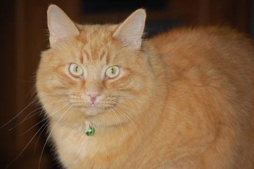 猫が鳥を見るポーズ07