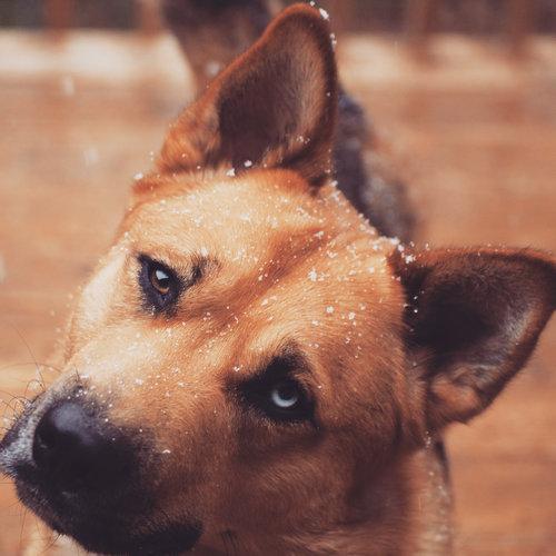 力持ちの犬と雪02