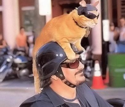 メガネ猫15